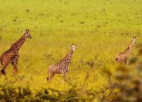 Akagera National Park - safari - Rwanda - foto: Visit Rwanda