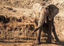 Ashnil Samburu Camp - olifant - Samburu Game Reserve - Kenia - foto: Ashnil Samburu Camp