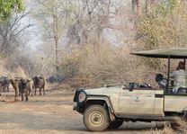Baines River Camp - gamedrive - Lower Zambezi - Zambia - foto: Baines River Camp