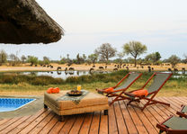 Bomani Tented Lodge - splash pool - Hwange - Zimbabwe - foto: Imvelo Safari Lodges