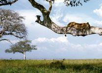Queen Elizabeth National Park - boomklimmende leeuw - Oeganda - foto: pixabay
