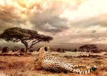 Cheetah - landschap - safari - Masai Mara - Kenia - foto: pixabay