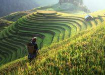 China rijstterrassen