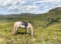 Drakensbergen - paard - Zuid-Afrika - foto: Travel Rumors