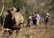 Ndlovu Camp - Hlane Royal Park - neushoorn - Swaziland - Zuid-Afrika - foto: Ndlovu Camp