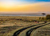 Impala - savanne - Kenia - foto: pixabay