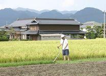 Landbouw platteland - Japan