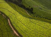 Theeplantage landschap - Rwanda - foto: Visit Rwanda