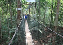 boomtoppenwandeling Taman Negara - foto: Jakko&Hilde