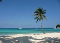 Mövenpick Resort and Spa - palm - Boracay - Filipijnen - foto: Floor Ebbers