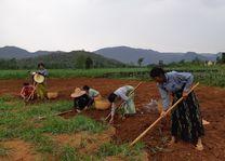 Myanmar - Inle Lake - werkers in het veld - foto: Daniel de Gruiter