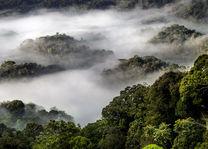 Nyungwe Forest - regenwoud - Rwanda - foto: Visit Rwanda
