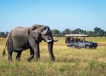 Okavango Delta - olifant op safari - Botswana - foto: DumaTau Camp