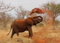 Olifant - Kenia - foto: pixabay
