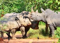 Rhino Fund Uganda - neushoorns
