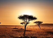 Savanne - landschap - Kenia - foto: pixabay