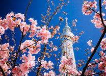 Sky Tree met kersenbloesem - Tokyo - Japan - foto: flickr