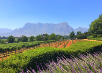 Stellenbosch - Zuid-Afrika