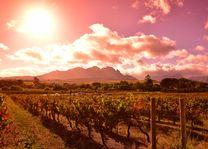 Stellenbosch - Wijnlanden - Zuid-Afrika - foto: South African Tourism Board