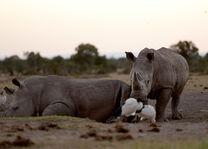 Sweetwaters Serena Camp - Ol Pejeta Conservancy - Kenia - foto: Serena Hotels & Resorts