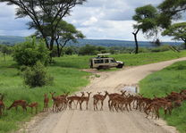 Tarangire gamedrive - green season - Tanzania - foto: Martijn Visscher