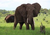 Tarangire - green season - olifanten - Tanzania - foto: Martijn Visscher