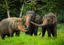 Thailand - Khao Sok National Park - Elephant Hills - Elephant Camp - olifanten - foto: Elephant Hills