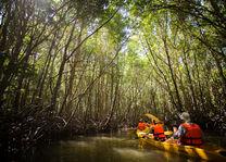 Thailand - Khao Sok National Park - kano - mangrove - foto: Elephant Hills