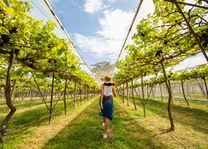 Thailand - PB Valley Khao Yai Winery - vrouw tussen wijnranken - Copyright: TAT