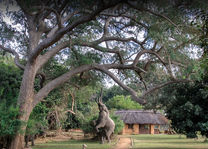 Track and Trails River - exterior - South Luangwa - Zambia - foto: Track and Trails River Camp