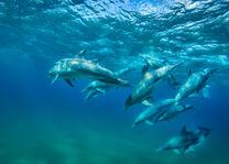 Duiken - dolfijnen - Zuid-Mozambique - foto: White Pearl Resort