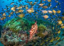 Duiken - koraal - Zuid-Mozambique - foto: White Pearl Resort