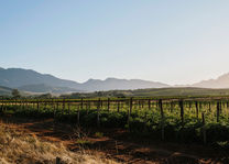 Wijnlanden - Zuid-Afrika - Robertson - foto: Robertson Small Hotel