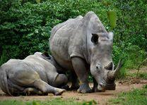 Ziwa Rhino Sanctuary - neushoorns - Oeganda