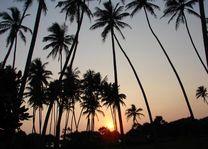 palmen met ondergaande zon - Sri Lanka - Algemeen