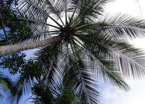 top palmboom - Thailand - Algemeen