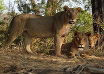 Loes & Antoine - Zambia - Algemeen