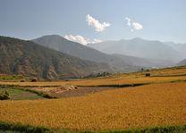 Rijstvelden Dochu la pas - Bhutan - foto: Marloes Wijnhoff