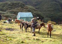 Paarden in Buthan - Druk Path - Bhutan - foto: Lokale agent