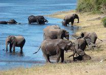 Olifanten in water - Botswana
