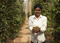 Cambodja - Knai Bang Chatt - peper boerderij