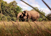 Cambodja - Mondulkiri - Elephant Valley Project