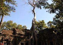 Ta Prohm Tempel in Siem Reap - Siem Reap - Cambodja