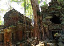Ta Prohm Tempel in Siem Reap - Siem Reap - Cambodja - foto: Janneke Zwiers