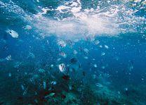 duiken en snorkelen - waterwereld - Mauritius - foto: unsplash