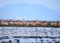 flamingos - Lake Natron - Tanzania - foto: Martijn Visscher
