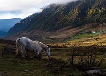 horse trekking - Phobjika Vallei - Bhutan