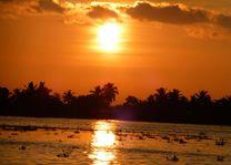 Zonsondergang in de Backwaters - Backwaters - India - foto: Karin Nuijt
