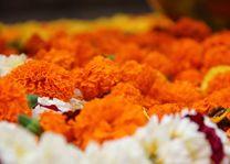 kleurrijke bloemen bij Bodhgaya 2 - Bodhgaya - India - foto: Archief