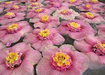 bloemen in de lobby, India - India - foto: Mieke Arendsen